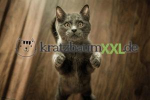 Kratzbaum XXL - Große und robuste Designer-Kratzbäume für Maine Coon Katzen