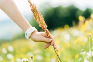Hand an einem Blütenhalm