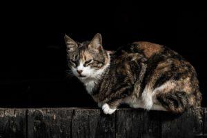 grimmig schauende Katze