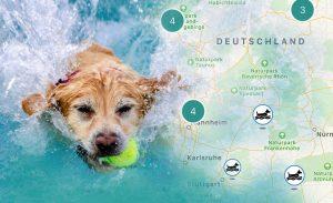 schwimmender Hund mit Ball im Maul