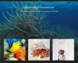 Shop für den Meerwasseraquarianer